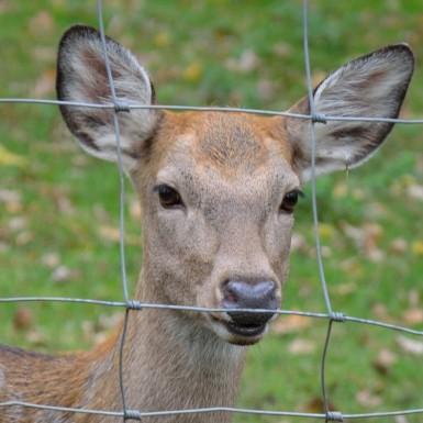 roe-deer-177947_1920